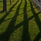 Late Afternoon Shadows