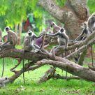 Monkey Troupe