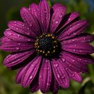 Splash of Purple