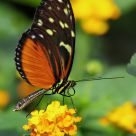 Jardins des Papillons - Alsace