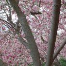 Springtime In Princeton