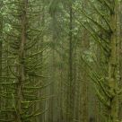 Misting Branch