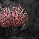 Sin Flower