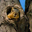 Squirrel Takes a Break