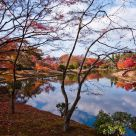 Maple Trees by the Lake
