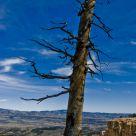 Dead Lone tree