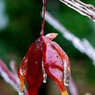 Preserved in Ice