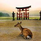 Atardecer en la isla de Miyajima con ciervos