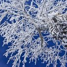 Hoar Frost on Trees #4