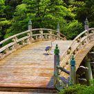 Grulla en el puente