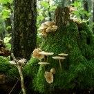 Mushroom forrest