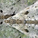 Reflection In A Water Hole