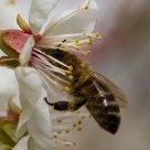 Tasty blossom