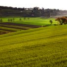The green Mossano (Vicenza, Italy)