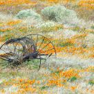 Rural Rustic Farm Equipment
