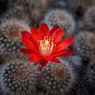 Une fleur parmis les cactus