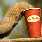 Squirrel Likes Coffee
