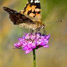 Mariposa sobre flor violeta