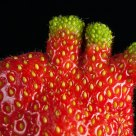 Four-fingered strawberry