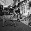 vrindavan street