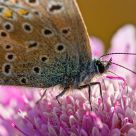 Butterfly in purple flower