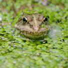 Frog Wearing Makeup