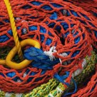 Web Of Color.