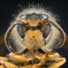 Dead Dirty Bee