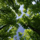 Under The Forest Canopy