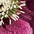 1/4 Flower