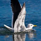 Landing on water