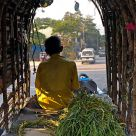 Ox-cart, Colombo