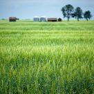 Ripening Fields