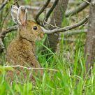 Hare homeland