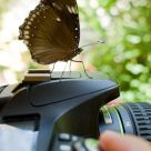 The Pentaxian Butterfly