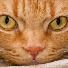 La mirada del gato.