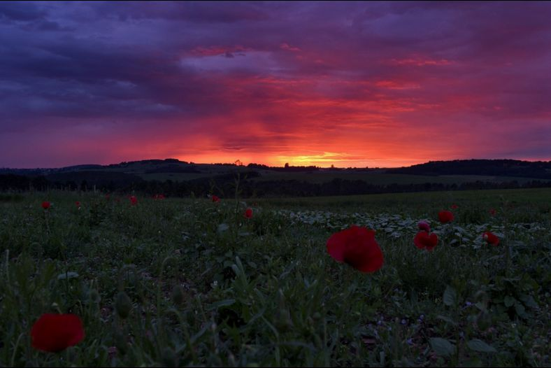 Sunset and a poppy field