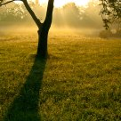 Morning Sun Rays Behind a Tree