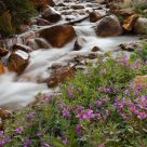 Rocky Mountain Summer Stream