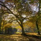 autumn sun in a park