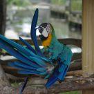 twisty parrot