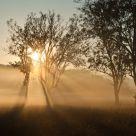 Fog Rays