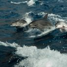three Wild Dophins