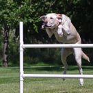 Daisy jumping