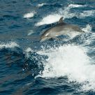 Jumping wild  Dophin