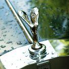 Wet Rolls