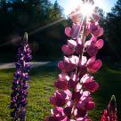 Garden Brilliance