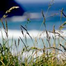 Seagrass and Surf