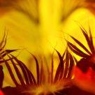 Flower Furnace