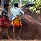 Elephant men